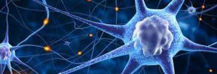 Neurologia - img